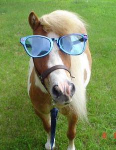 lustig_pony
